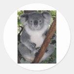 Koala linda Aussi de Zazzle del destino interior Pegatinas Redondas