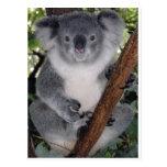 Koala linda Aussi de Zazzle del destino interior Postales