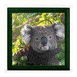Koala linda cajas de recuerdo