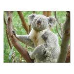Koala linda comunicados personales