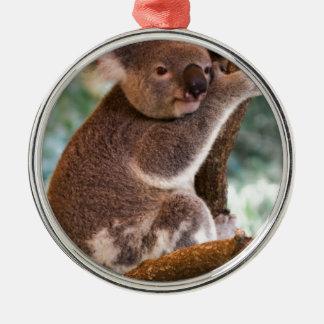 Koala linda adornos