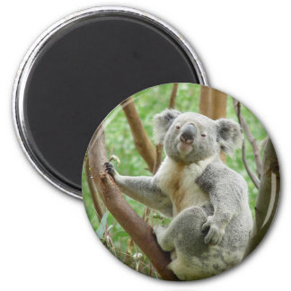 Koala linda imán redondo 5 cm