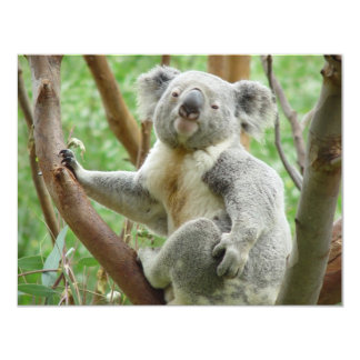 """Koala linda invitación 4.25"""" x 5.5"""""""