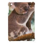 Koala linda iPad mini coberturas