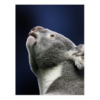 Koala linda que mira para arriba en maravilla postales