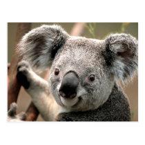 Koala line postcard
