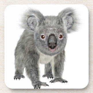 Koala Looking Forward Beverage Coaster