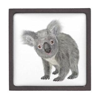 Koala Looking Quizzical Jewelry Box
