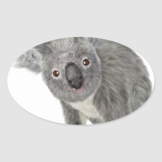Koala Looking Quizzical Oval Sticker