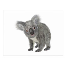 Koala Looking Quizzical Postcard
