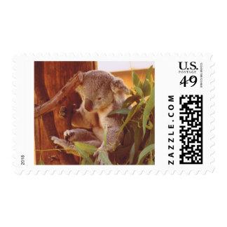 Koala love postage