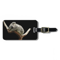 Koala luggage tag