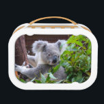 "Koala Lunch Box<br><div class=""desc"">Photo of Koala taken on Gold Coast Qld</div>"
