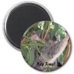 Koala Magnet