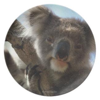 koala melamine plate