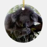 Koala mimosa adorno para reyes