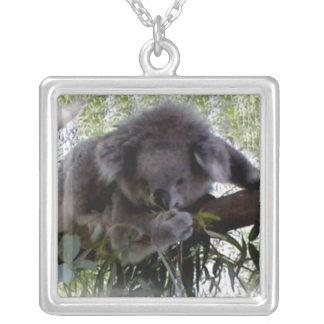 Koala mimosa colgante cuadrado