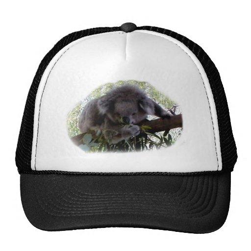 Koala mimosa gorras de camionero