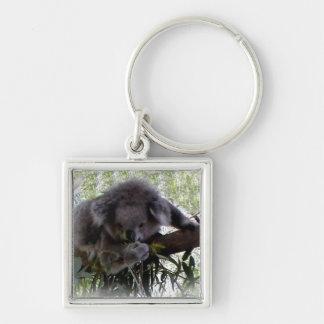 Koala mimosa llavero personalizado