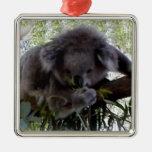 Koala mimosa ornamento de reyes magos