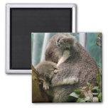 Koala Mom and New Baby Fridge Magnet