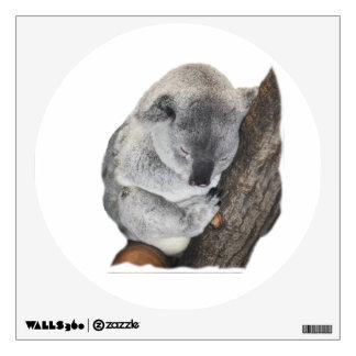 Koala Napping en su pared