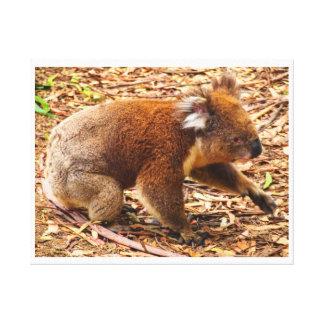Koala No1 Canvas Print