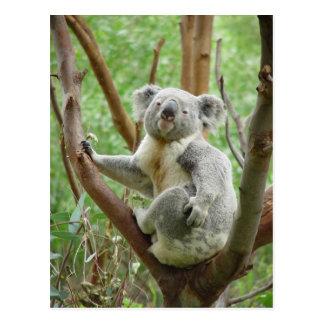 Koala on a tree postcard