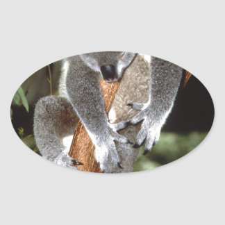 koala oval sticker