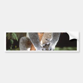 koala pegatina para auto