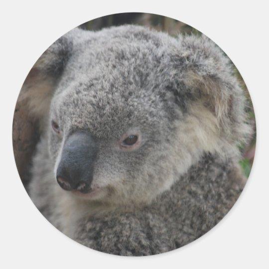 Koala Pegatina Redonda