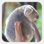 Koala Pegatinas Cuadradas Personalizadas
