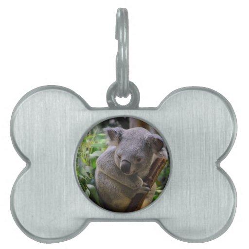 Koala Pet ID Tags