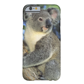 Koala, Phascolarctos cinereus), Australia, Barely There iPhone 6 Case