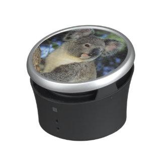 Koala, Phascolarctos cinereus), Australia, Bluetooth Speaker