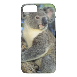 Koala, Phascolarctos cinereus), Australia, iPhone 7 Case