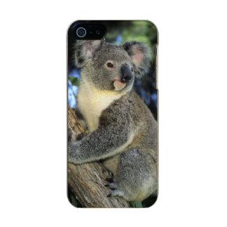 Koala, Phascolarctos cinereus), Australia, Metallic Phone Case For iPhone SE/5/5s