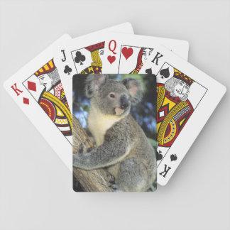 Koala, Phascolarctos cinereus), Australia, Poker Cards