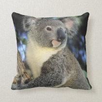 Koala, Phascolarctos cinereus), Australia, Throw Pillow
