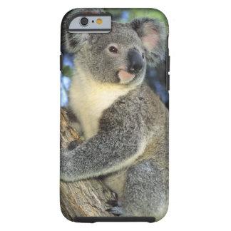 Koala, Phascolarctos cinereus), Australia, Tough iPhone 6 Case