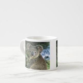 Koala, Phascolarctos cinereus), endangered, Espresso Cup