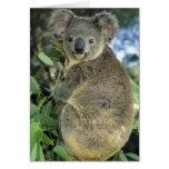 Koala, Phascolarctos cinereus), endangered, Greeting Card