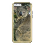 Koala, Phascolarctos cinereus), endangered, Incipio Feather® Shine iPhone 6 Case