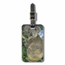 Koala, Phascolarctos cinereus), endangered, Luggage Tag