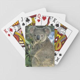 Koala, Phascolarctos cinereus), endangered, Playing Cards