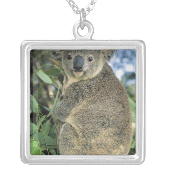 Koala, Phascolarctos cinereus), endangered, Silver Plated Necklace
