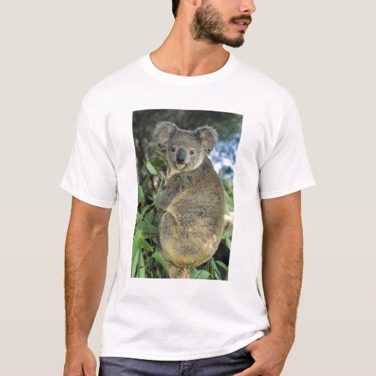 Koala, Phascolarctos cinereus), endangered, T-Shirt
