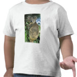 Koala, Phascolarctos cinereus), endangered, T Shirts