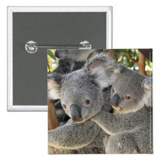 Koala Phascolarctos cinereus Queensland . 2 Inch Square Button