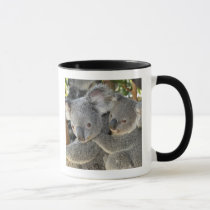 Koala Phascolarctos cinereus Queensland . Mug